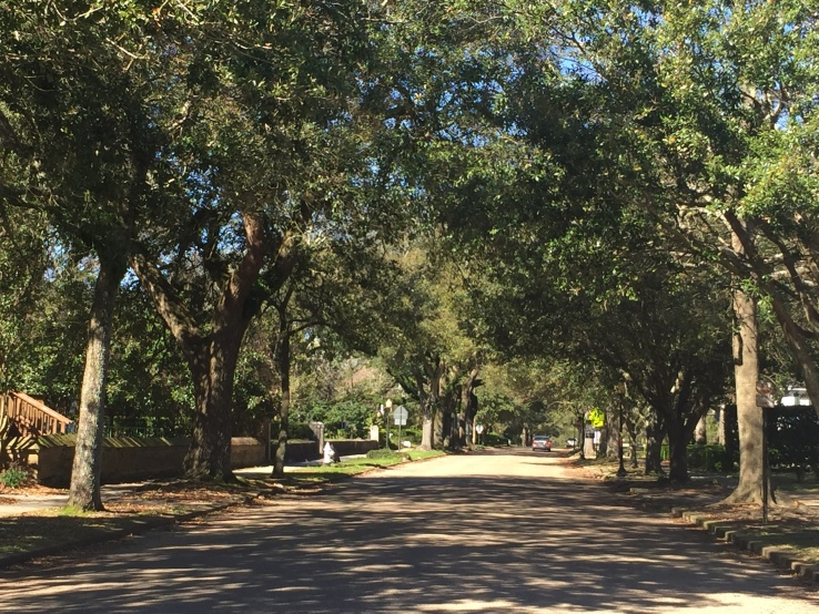 Laurel Mississippi Fifth Street Southern live oaks Deep South